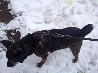 1632 X 1224 521.8 Kb Боря, сбитая собака, Авангардная, скорее всего не будет видеть