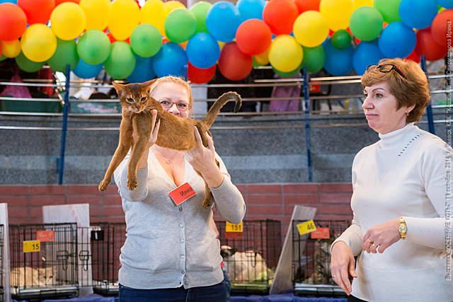 640 x 427 640 x 582 640 x 427 Веточка для Коржиков.и абиссинских кошек у нас есть щенки и котята