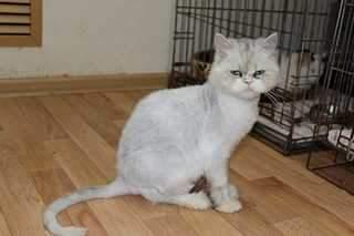 1920 X 1279 93.1 Kb 1920 X 1279 91.1 Kb Передержка для животных Пес Барбос отдает животных и пока не принимает кошек на лето!