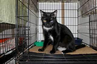 1920 X 1279 210.4 Kb 1920 X 1279 93.1 Kb 1920 X 1279 91.1 Kb Передержка для животных Пес Барбос отдает животных и пока не принимает кошек на лето!