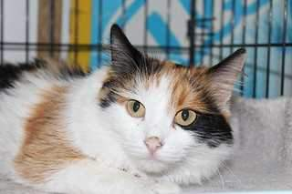1920 X 1279 140.5 Kb Передержка для животных Пес Барбос отдает животных и пока не принимает кошек на лето!