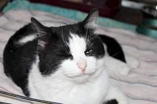 1920 X 1279 113.5 Kb 1920 X 1279 140.5 Kb Передержка для животных Пес Барбос отдает животных и пока не принимает кошек на лето!