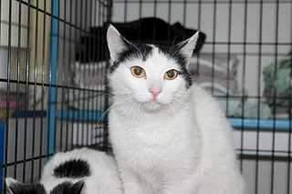 1920 X 1279 122.1 Kb 1920 X 1279 113.5 Kb 1920 X 1279 140.5 Kb Передержка для животных Пес Барбос отдает животных и пока не принимает кошек на лето!