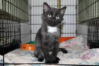 1920 X 1279 152.5 Kb Передержка для животных Пес Барбос отдает животных и пока не принимает кошек на лето!