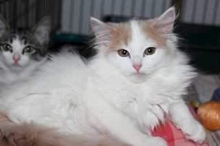 1920 X 1279 71.3 Kb 1920 X 1279 175.6 Kb 1920 X 1279 152.5 Kb Передержка для животных Пес Барбос отдает животных и пока не принимает кошек на лето!
