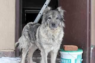 1920 X 1279 130.5 Kb Передержка для животных Пес Барбос отдает животных и пока не принимает кошек на лето!