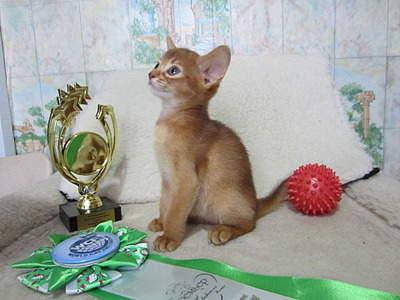 1920 X 1440 511.4 Kb 1593 X 1241 419.7 Kb 1518 X 1210 361.9 Kb Веточка для Коржиков.и абиссинских кошек у нас есть щенки и котята