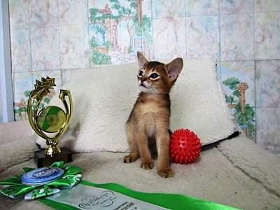 1920 X 1440 549.8 Kb 1698 X 1276 403.5 Kb Веточка для Коржиков.и абиссинских кошек у нас есть щенки и котята