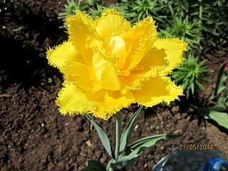 1920 X 1440 599.7 Kb Тюльпаны, нарциссы, ирисы, крокусы - все весенние луковичные