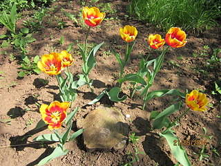 1920 X 1440 480.2 Kb 1920 X 1440 768.5 Kb 1920 X 1440 599.7 Kb Тюльпаны, нарциссы, ирисы, крокусы - все весенние луковичные
