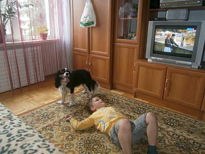 1920 X 1440 927.3 Kb 1920 X 1440 794.7 Kb 1920 X 1440 725.9 Kb 1920 X 1440 690.1 Kb Кавалер-кинг-чарльз-спаниель. Собака, создающая комфорт. Питомник Auroconcurr.