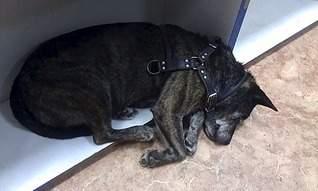 1920 X 1149 470.4 Kb Боря, сбитая собака, Авангардная, скорее всего не будет видеть