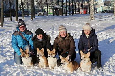1920 X 1280 714.5 Kb Веточка для Коржиков.и абиссинских кошек у нас есть щенки и котята