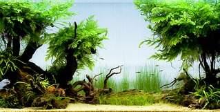 1200 X 609 267.8 Kb Аквариумные растения