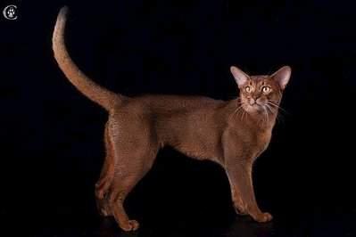 640 X 427  24.9 Kb Веточка для Коржиков.и абиссинских кошек у нас есть щенки и котята
