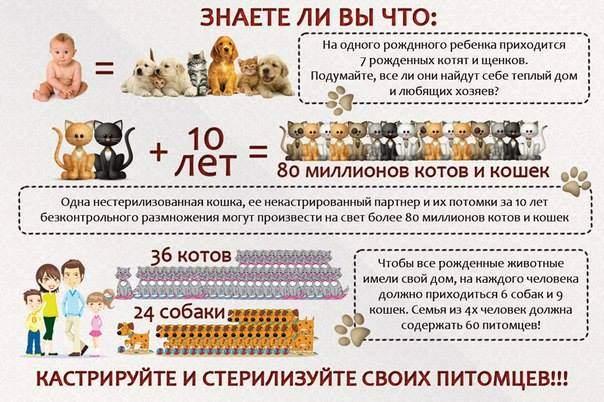 604 x 402 Котята ищут новый дом)