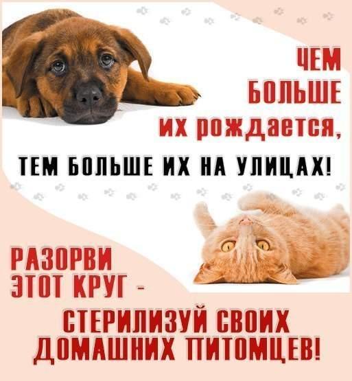513 x 555 Котята ищут новый дом)