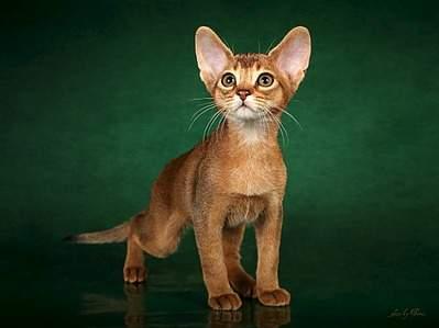 1091 X 818 98.4 Kb 550 X 640 42.2 Kb 480 X 640 30.4 Kb 544 X 816 63.6 Kb 1091 X 818 110.0 Kb Веточка для Коржиков.и абиссинских кошек у нас есть щенки и котята