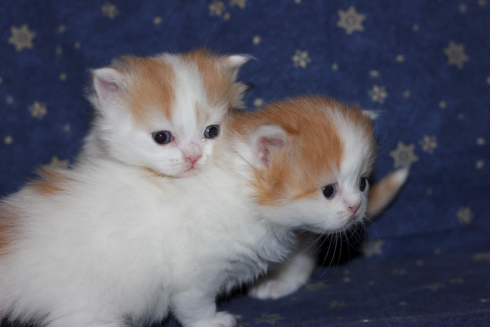 картинки какие котята бывают когда соединяла два