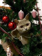 1920 X 2560 429.8 Kb Питомник британских кошек Cherry Berry's. У нас родились котята!