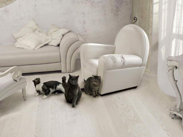 640 x 480 Силиконовые накладки на когти кошке. Кто пользуется?