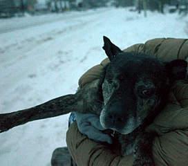 1200 X 1057 210.6 Kb Боря, сбитая собака, Авангардная, скорее всего не будет видеть