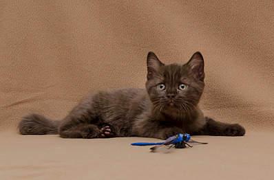 1920 X 1262 595.3 Kb 1920 X 1325 621.5 Kb 1920 X 1397 646.7 Kb 1920 X 1204 698.2 Kb Питомник британских кошек Cherry Berry's. У нас родились котята!