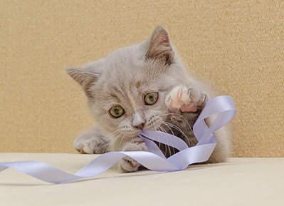 1920 X 1391 454.9 Kb 1920 X 1545 652.0 Kb 1920 X 1474 512.1 Kb Питомник британских кошек Cherry Berry's. У нас родились котята!
