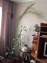 720 X 960 199.2 Kb Обмен садовыми растениями, растения в дар (только халява!)