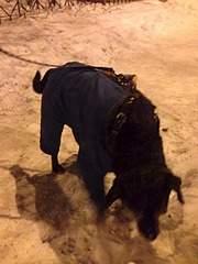 1920 X 2560 884.1 Kb Боря, сбитая собака, Авангардная, скорее всего не будет видеть