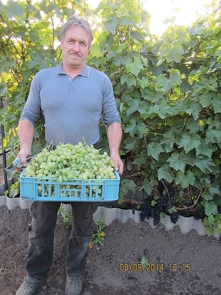 600 X 800 247.5 Kb 800 x 600 800 x 600 Саженцы винограда. Продам.