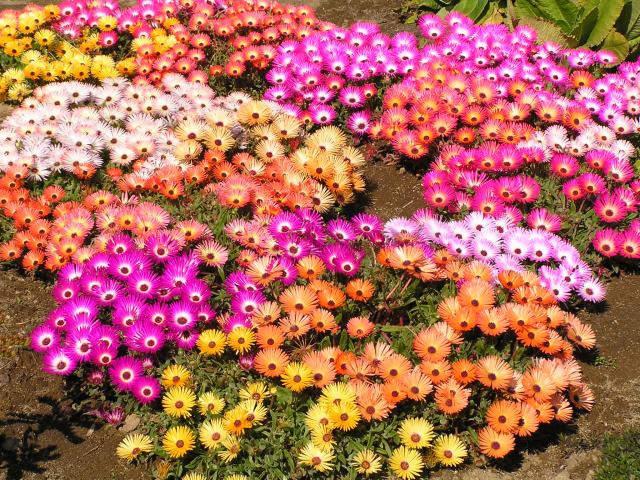 640 x 480 Цветы
