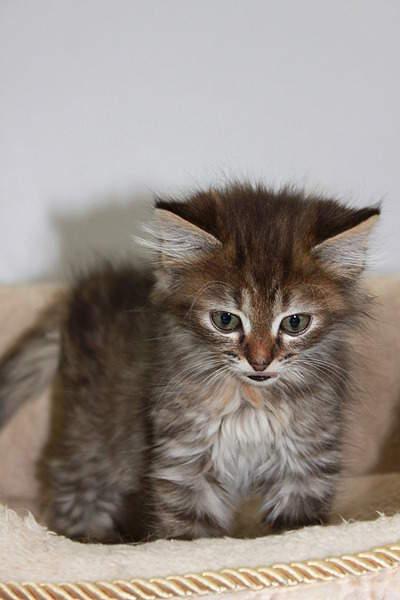 1920 X 2880 957.1 Kb Передержка для животных Пес Барбос отдает животных и пока не принимает кошек!