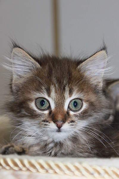 1920 X 2880 366.6 Kb 1920 X 2880 335.4 Kb 1920 X 2880 957.1 Kb Передержка для животных Пес Барбос отдает животных и пока не принимает кошек!