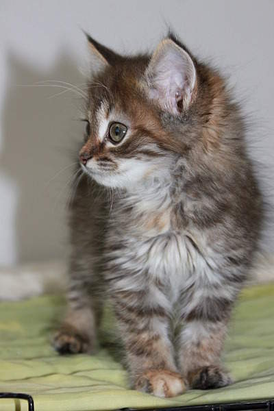 1920 X 2880 281.9 Kb 1920 X 2880 366.6 Kb 1920 X 2880 335.4 Kb 1920 X 2880 957.1 Kb Передержка для животных Пес Барбос отдает животных и пока не принимает кошек!