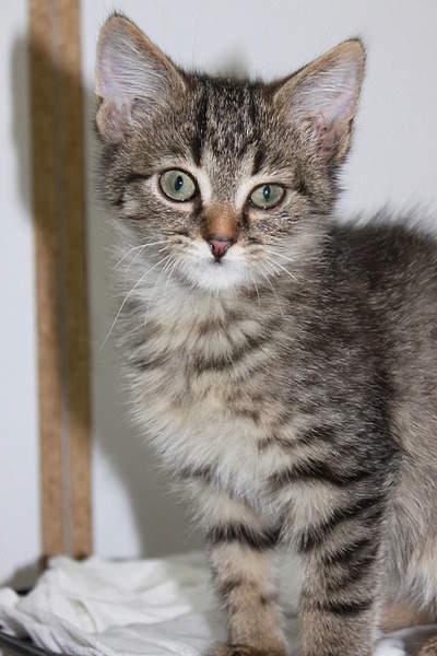 1920 X 2880 410.2 Kb Передержка для животных Пес Барбос отдает животных и пока не принимает кошек!