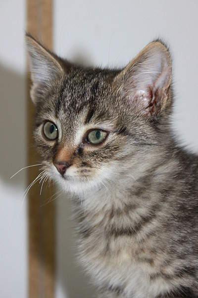 1920 X 2880 385.8 Kb 1920 X 2880 410.2 Kb Передержка для животных Пес Барбос отдает животных и пока не принимает кошек!