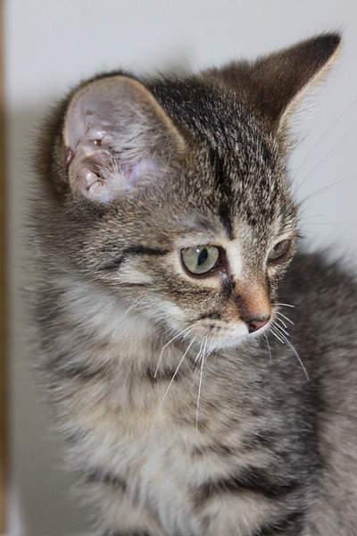 1920 X 2880 343.8 Kb 1920 X 2880 385.8 Kb 1920 X 2880 410.2 Kb Передержка для животных Пес Барбос отдает животных и пока не принимает кошек!