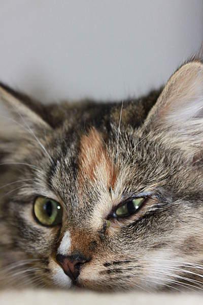 1920 X 2880 429.8 Kb Передержка для животных Пес Барбос отдает животных и пока не принимает кошек!