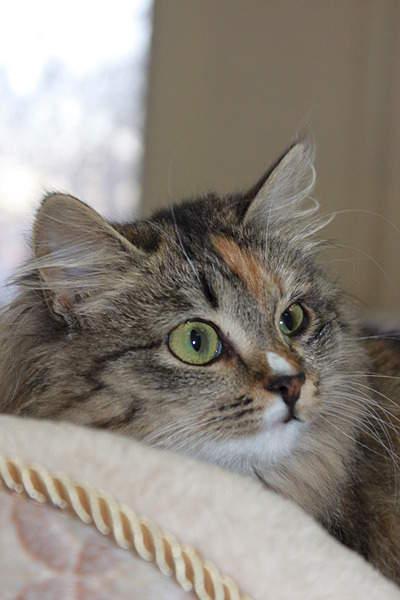 1920 X 2880 952.7 Kb 1920 X 2880 429.8 Kb Передержка для животных Пес Барбос отдает животных и пока не принимает кошек!