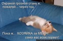 250 x 166 Веточка для Коржиков и абиссинских кошек