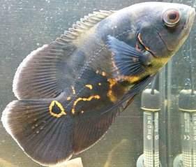 783 X 667 111.7 Kb только рыбы