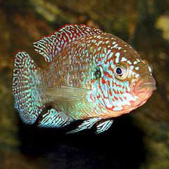 341 X 341 63.9 Kb только рыбы