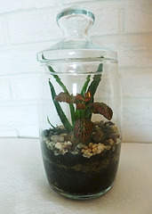 1920 X 2693 920.2 Kb 1920 X 1440 537.7 Kb 'Сад в стекле'. Композиции из растений.