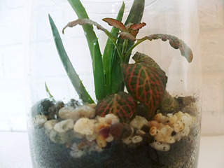 1920 X 1440 497.7 Kb 1920 X 2693 920.2 Kb 1920 X 1440 537.7 Kb 'Сад в стекле'. Композиции из растений.