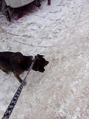 1920 X 2560 992.3 Kb Боря, сбитая собака, Авангардная, скорее всего не будет видеть