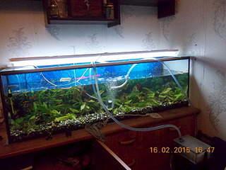 1920 X 1440 720.4 Kb DIY (сделай сам) в аквариуме.