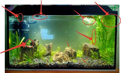 1201 X 723   1.0 Mb Как запустить аквариум?