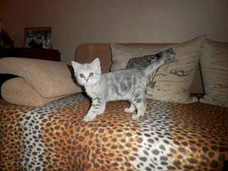 1920 X 1440 655.4 Kb Клуб любителей кошек 'Премьер'.