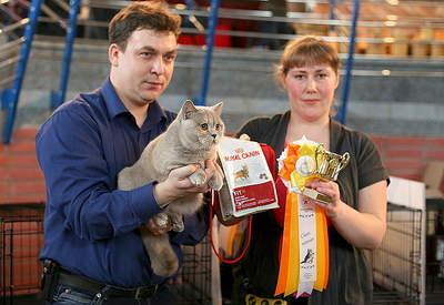 799 X 550 297.4 Kb 799 X 506 260.0 Kb 800 X 520 234.2 Kb Питомник британских кошек Cherry Berry's. У нас родились котята!